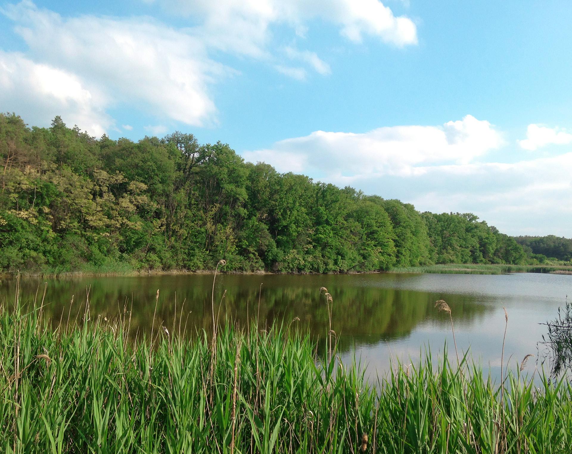 Eladó tó